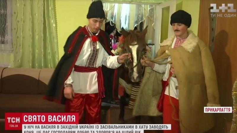 Конь в хату, или Новые традиции галичан