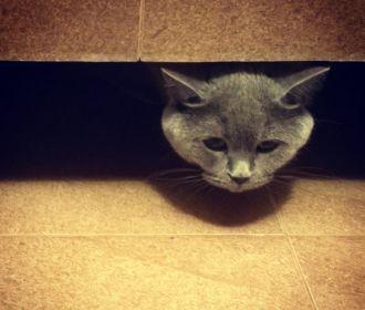 Александр Зубченко: ПАСЕ: пепел кота Скрипаля