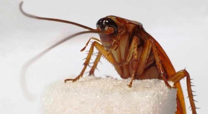 Куда подевались тараканы из российских квартир?