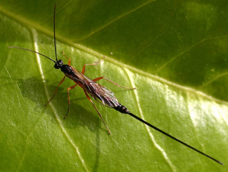 В Мурманской области нашли невиданных насекомых-паразитов