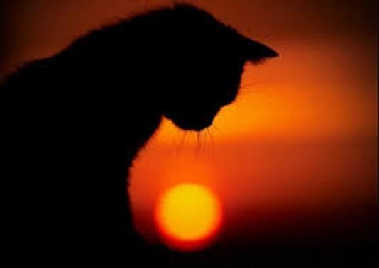 Черные кошки в вашингтонских кулуарах