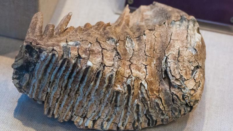 Недостающее звено эволюции два десятка лет пылилось в музее