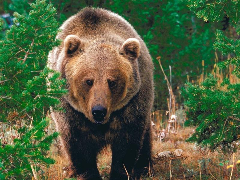 Оленевод рассказал, как выжил после схватки с медведем