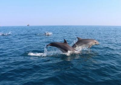 Украинские фейки об экологической катастрофе не подтвердились. Дельфинов в Керченском проливе все больше