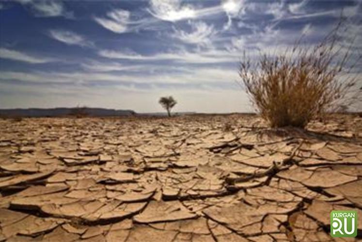 Алексей Кокорин: «Повлиять на ситуацию уже невозможно». Курганская область превращается в пустыню?