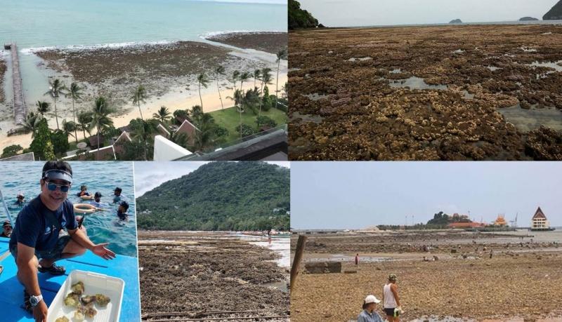 Ученые Разводят Руками: В Таиланде По Неизвестным Причинам Вода Отошла От Берега На 2 Км