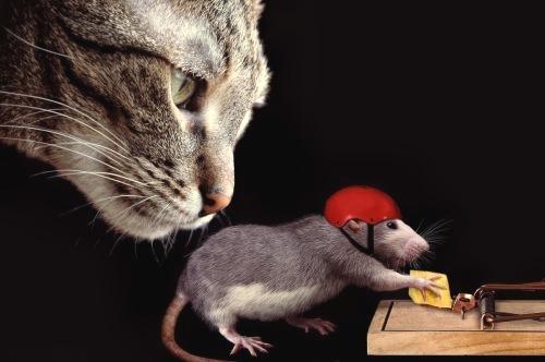 Для мышки и кошка зверь…