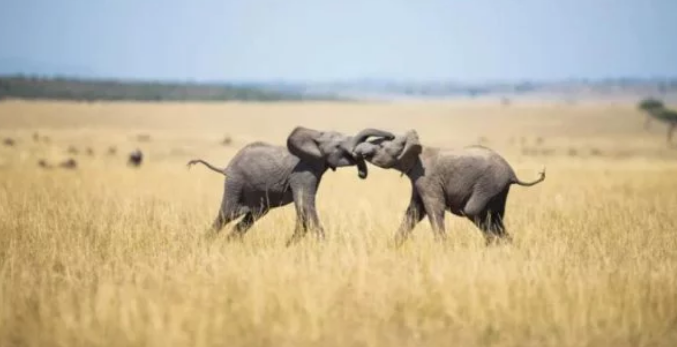 Генетический «Ноев ковчег» спасет 66 000 видов