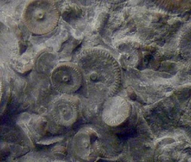 Правда ли, что Камчатский механизм сделан 400 млн. лет назад?