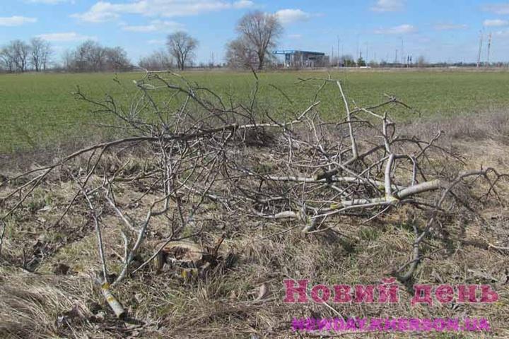 1615721781_ukr-140321-forest-01.jpg